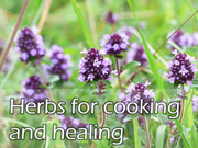 Herbs for cooking and healing