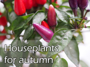 Houseplants for autumn