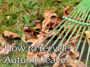 How to recycle Autumn leaves
