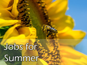 Jobs for summer